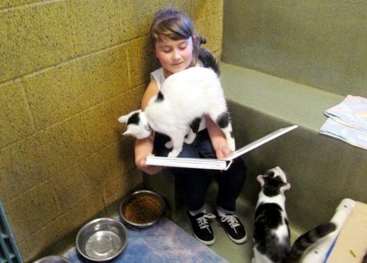 猫ちゃんに本を読み聞かせすると良い効果がある?! Book Buddies Program_b0007805_1425354.jpg