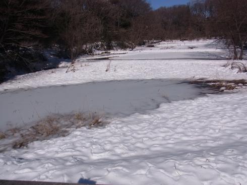 埼玉中部               雪越冬3種2014/02/16①_d0251807_16494397.jpg