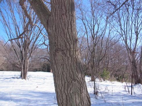 埼玉中部               雪越冬3種2014/02/16①_d0251807_16505151.jpg