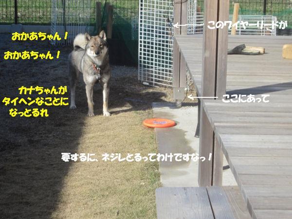 f0143123_20115428.jpg