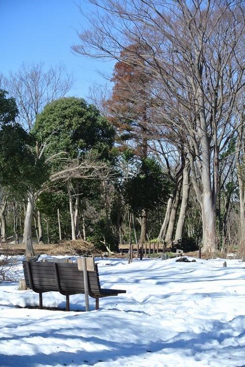 梅と雪と福寿草_e0089232_13065306.jpg