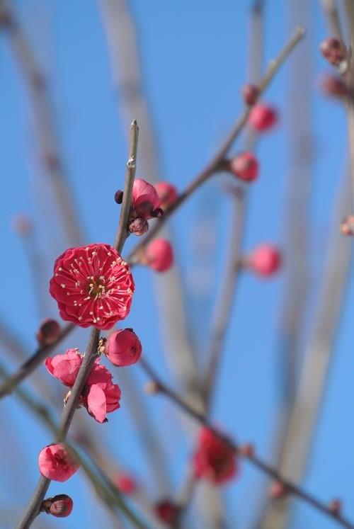 梅と雪と福寿草_e0089232_13065383.jpg