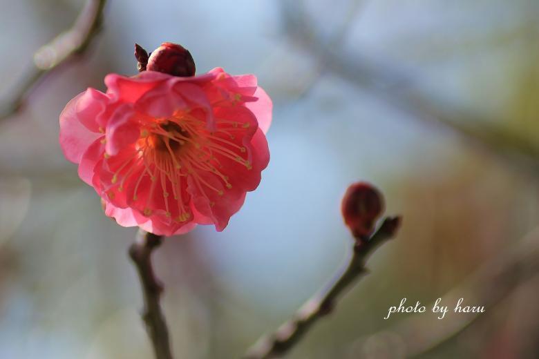 陽春_f0297537_15371879.jpg