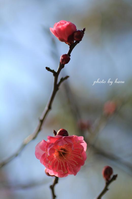 陽春_f0297537_15373851.jpg