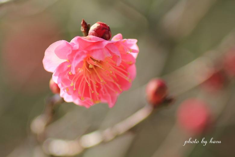 陽春_f0297537_1537576.jpg