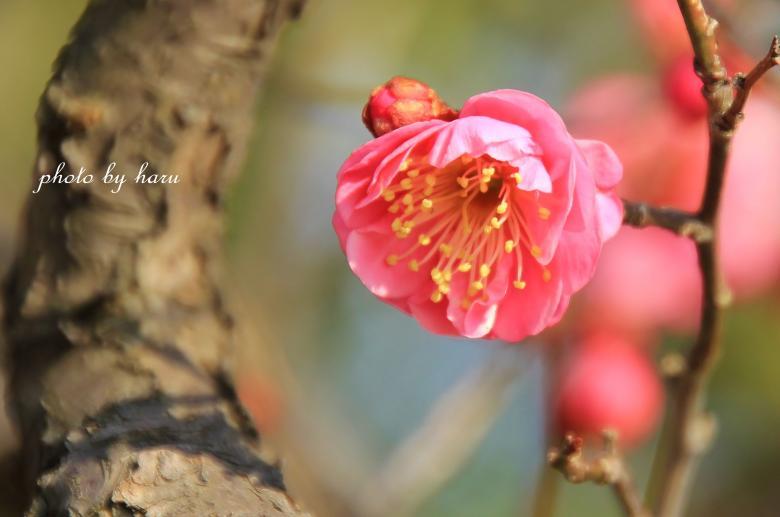 陽春_f0297537_1538134.jpg