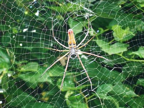 人体蜘蛛の巣説_b0084241_19431347.jpg
