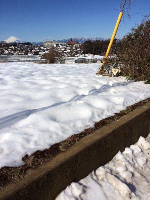 今朝は 2人で 雪かき・・なんとかエンドウ豆の畝 立て直しました・・復活を願います_c0222448_16103210.jpg