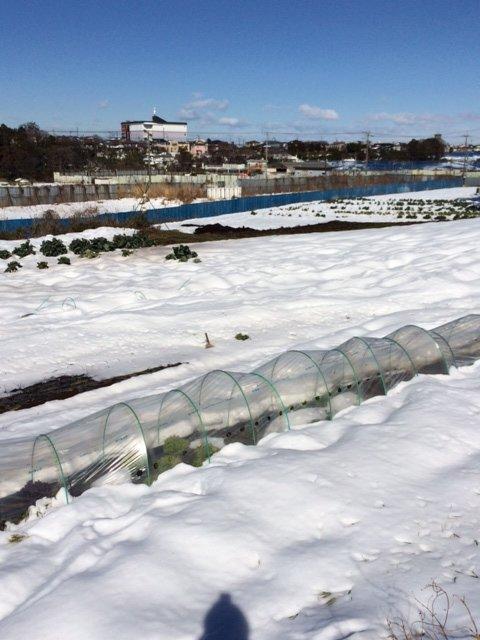 今朝は 2人で 雪かき・・なんとかエンドウ豆の畝 立て直しました・・復活を願います_c0222448_16113280.jpg