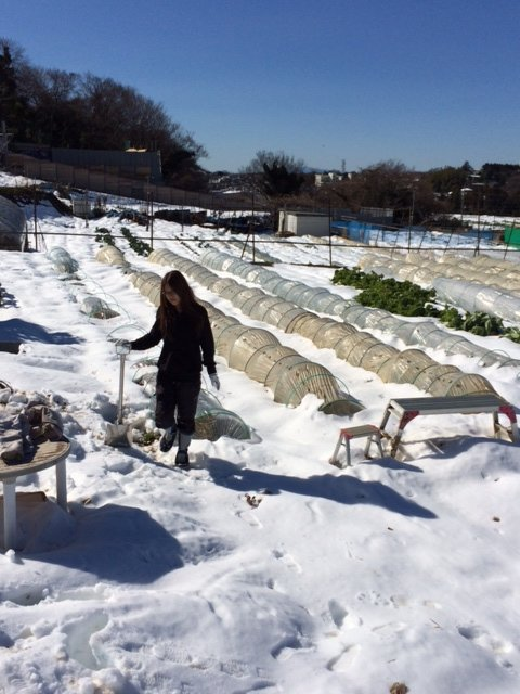 今朝は 2人で 雪かき・・なんとかエンドウ豆の畝 立て直しました・・復活を願います_c0222448_16114569.jpg