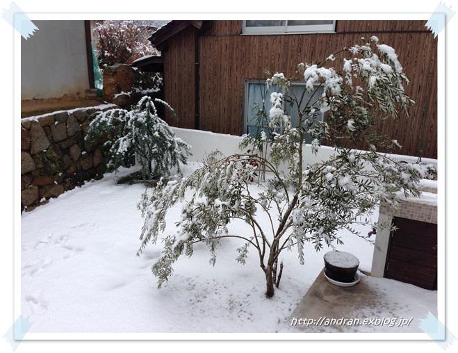 ミモザと雪_c0176271_22321987.jpg