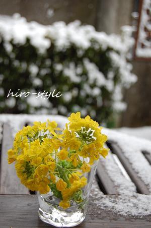 *雪*春*待ち*_c0128886_940145.jpg