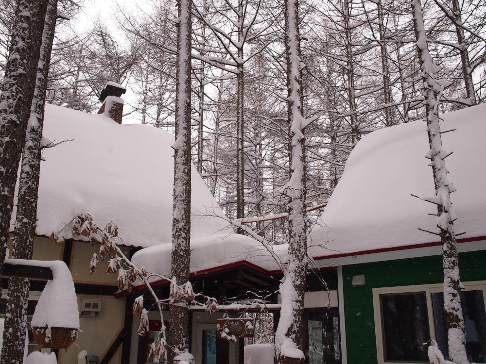 今年は雪が少ない?と思ってたら・・先週に引き続き大雪!_f0276498_16050088.jpg