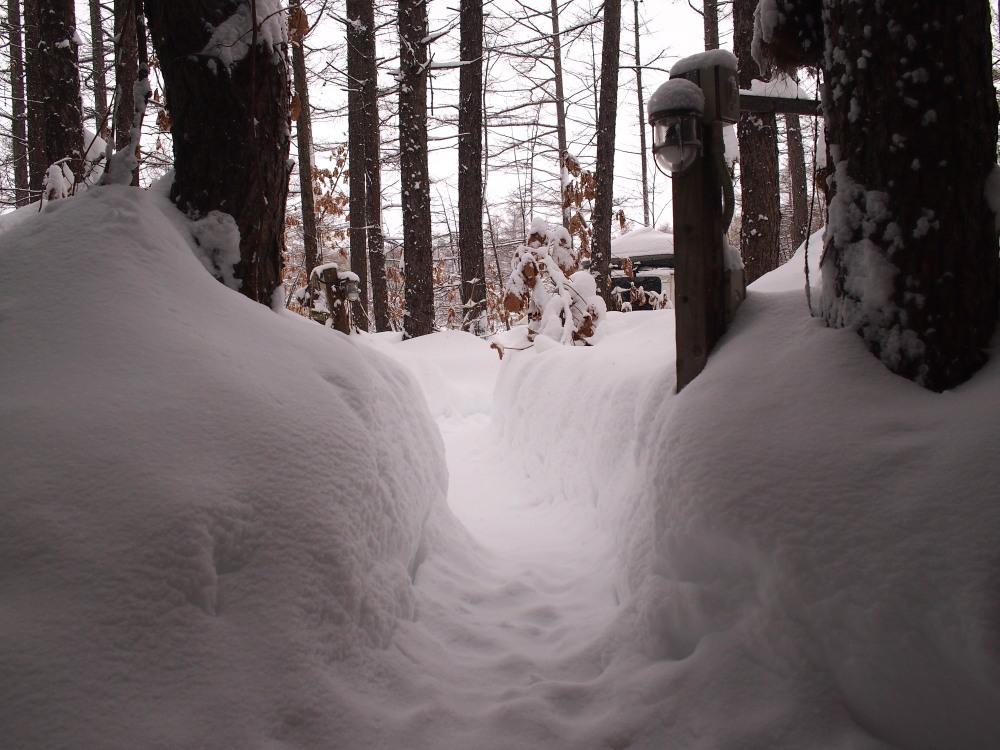 今年は雪が少ない?と思ってたら・・先週に引き続き大雪!_f0276498_16055047.jpg