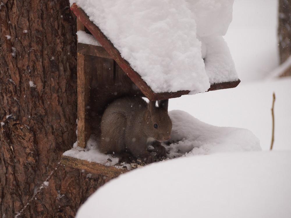今年は雪が少ない?と思ってたら・・先週に引き続き大雪!_f0276498_16061883.jpg