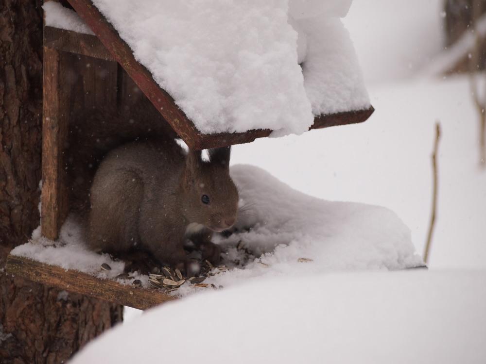 今年は雪が少ない?と思ってたら・・先週に引き続き大雪!_f0276498_16063674.jpg