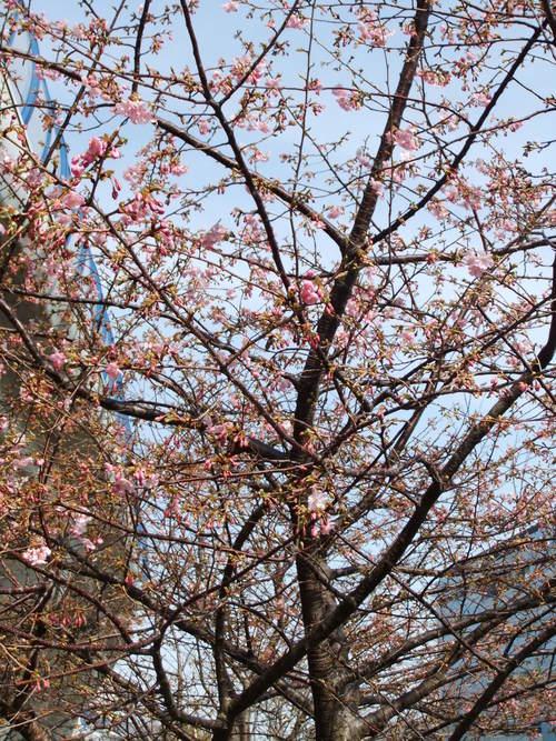 雪の中に桜を見つけました。_b0137932_13203352.jpg