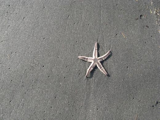 海の星_f0305844_21303175.jpg
