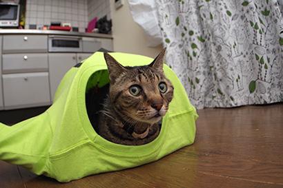 猫、お気に入りのTシャツテント_a0028451_1371969.jpg