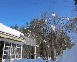 雪はあがりましたが_d0050155_001579.jpg