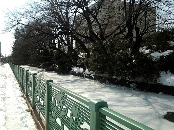 大雪・再び_a0061057_21565245.jpg