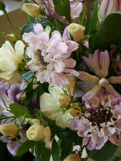入卒関連のお花、ご予約始まりました。。。_a0229658_18145080.jpg
