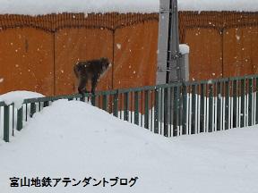 宇奈月温泉駅で、遭遇したのは・・・_a0243562_1111873.jpg