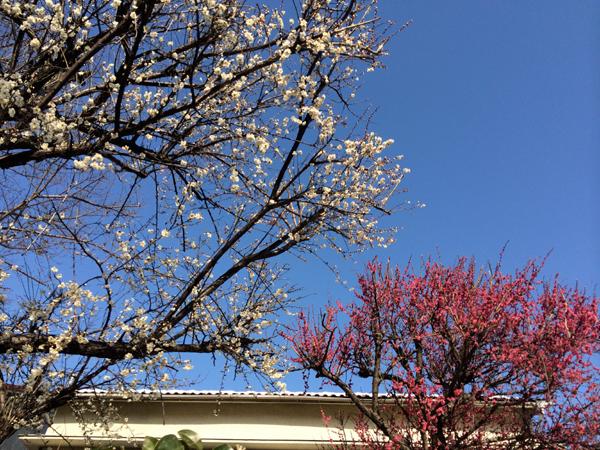 春の気配_d0021969_17373723.jpg