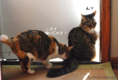 順番待ち、に飽きる猫_b0253205_0304784.jpg