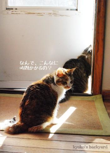 順番待ち、に飽きる猫_b0253205_030487.jpg