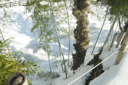 今年の雪_e0241305_16112860.jpg