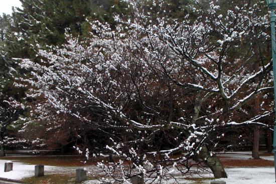 京都御苑 14雪げしき15_e0048413_184143.jpg