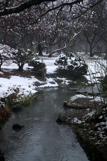 京都御苑 14雪げしき15_e0048413_1842930.jpg