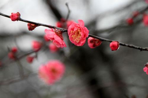京都御苑 14雪げしき15_e0048413_1845733.jpg