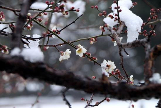 京都御苑 14雪げしき15_e0048413_185889.jpg