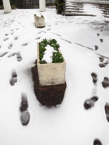 なぜか、暖かい雪の2日間。_d0046025_045352.jpg