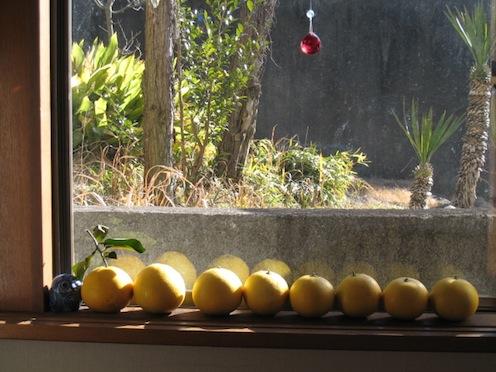グレープフルーツ収穫_e0170272_213934100.jpg