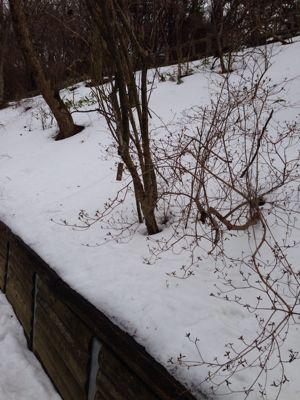 雪、雪の南河内でした。_a0233896_2333361.jpg