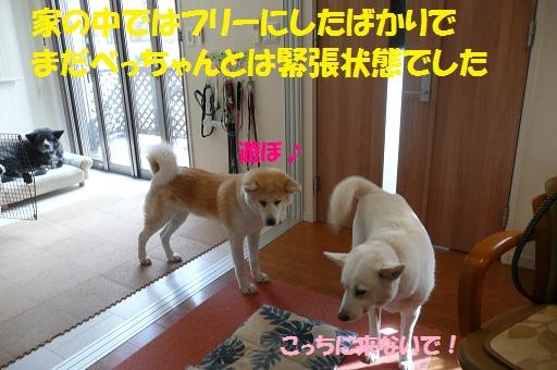 f0121712_13504567.jpg