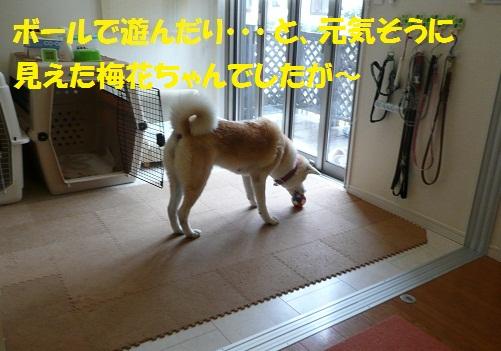 f0121712_13511867.jpg