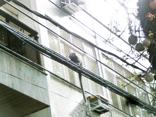 """from RIO <ケイタ☆ブラジルのポルトガル語講座 #09>  \""""macaco\""""    マカコ:猿▶ _b0032617_12582518.jpg"""