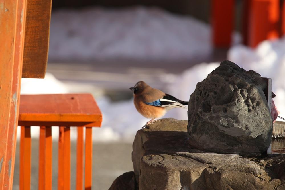野鳥観察_c0111229_1715912.jpg
