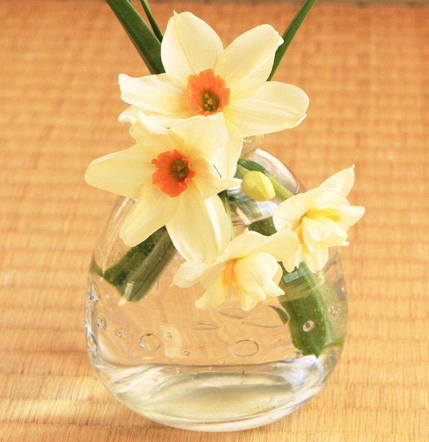 折れた水仙は花瓶で活かします_a0107574_18570460.jpg