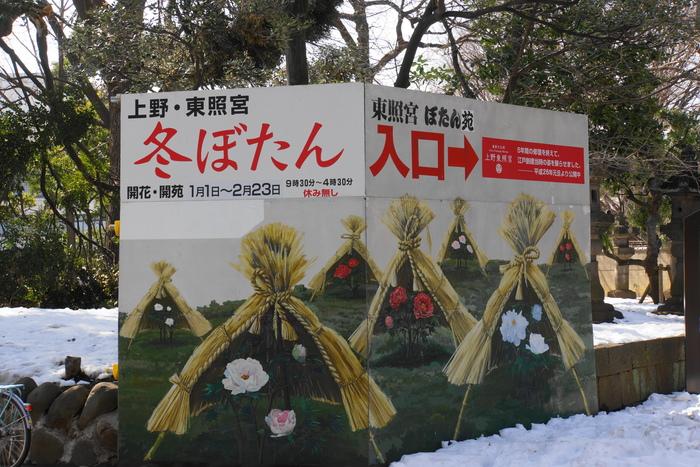 上野・東照宮ぼたん苑 1/5_b0093088_7103257.jpg