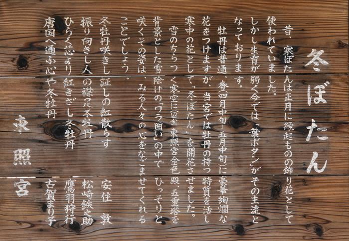 上野・東照宮ぼたん苑 1/5_b0093088_7105048.jpg