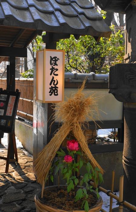 上野・東照宮ぼたん苑 1/5_b0093088_7214188.jpg