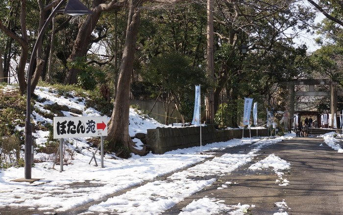 上野・東照宮ぼたん苑 1/5_b0093088_783854.jpg