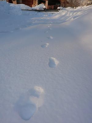 ぜんぶ雪のせいだ!_b0219993_169471.jpg
