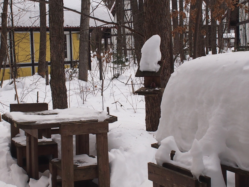 今年の冬もやってきました!「オオマシコさん」_f0276498_16113828.jpg