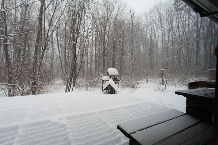2/8 雪の無かった冬、いきなり60cmの積雪に_c0137403_1353489.jpg